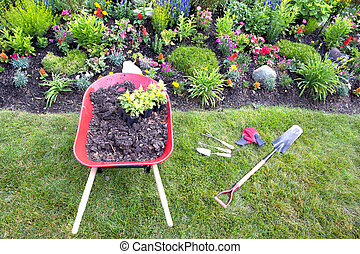 Transplanting celosia plants into the flower garden with a high angle view of a red metal wheelbarow filled with rich fertile earth and two seedlings at the edge of a flowerbed with garden tools