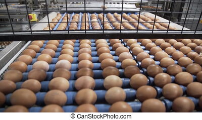 Transportation and industrial plant selection for egg. Wide...