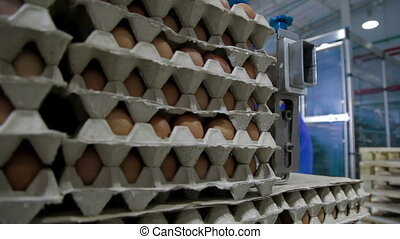 Transportation Eggs for automated sorting