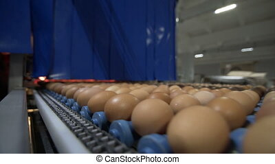 Transportation industrial plant selection for egg -...