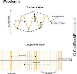 Diagram showing transverse and longitudinal wave forms.
