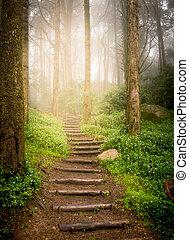 trap, het uitgaan, helling, in, bos, naar, ondergaande zon