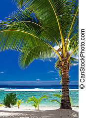 trascurare, isola, albero, tropicale, palma, roratonga, cuoco, spiaggia