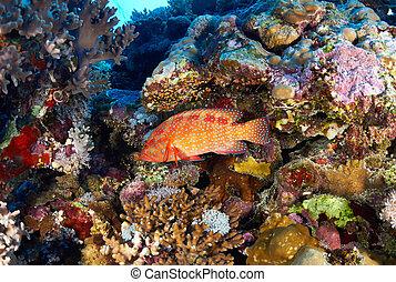 trasero coralino