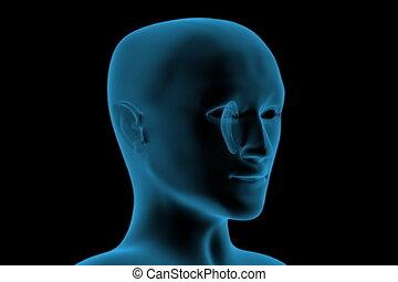trasparente, 3d, testa umana