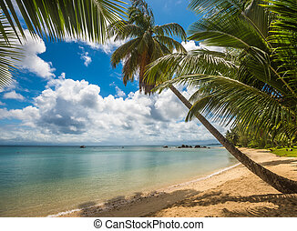 trauminsel, -, meer, himmelsgewölbe, und, palmen