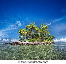 trauminsel, mit, exotische , grün, betriebe, und, kokosnuss, bäume, in, klar, meer, water., spielraum- bestimmungsort, szenerie, tourismus, landschaftsbild, hintergrund., sonniger tag, in, thailand, paradies