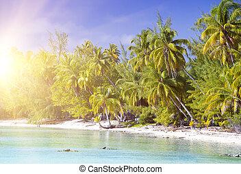 trauminsel, mit, palmen, in, der, meer