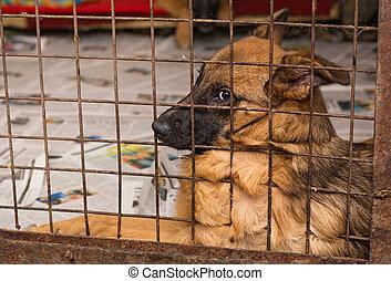 traurige , hunden, in, a, käfig, von, a, unterstand
