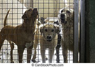 traurige , hunden, verlassen
