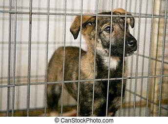traurige , junger hund, in, unterstand, für, wohnungslose, tiere