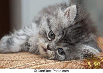 traurige , katzenkinder