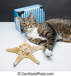travel agency - cute tiger cat lying in front of a blue box...