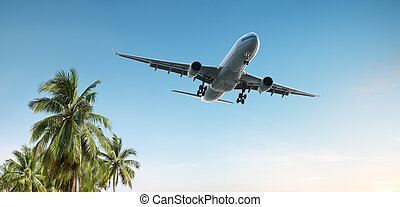 travel - airplane flying over tropical palm trees