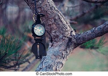 Travel compass on tree