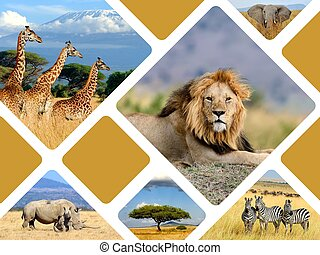 Travel concept with photos collage african animals