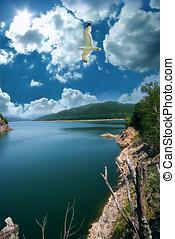 Travel destination and seagull at lake Vidraru in Romania
