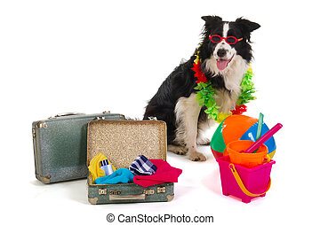 Travel dog - Dog with sunglasses ready to travel for the...