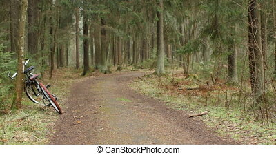 travel forest road, bicycle in the foreground
