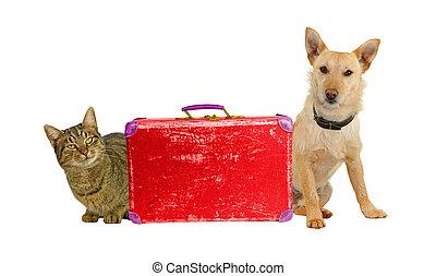 travel!, macska, let´s, suitcase., kutya