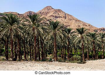 Travel Photos of Israel - Ein Gedi Spring - Plantation of...