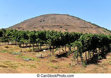 Travel Photos of Israel - Golan Heights - Mount Bental in...