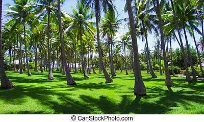 palm trees on tropical island in french polynesia