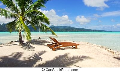 tropical beach with palm tree and sunbeds - travel, seascape...