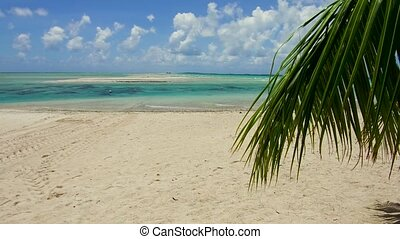 tropical beach with palm tree in french polynesia - travel,...