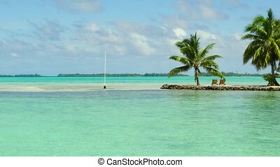 tropical beach with palm trees and sunbeds - travel,...