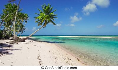 tropical beach with palm trees in french polynesia - travel,...