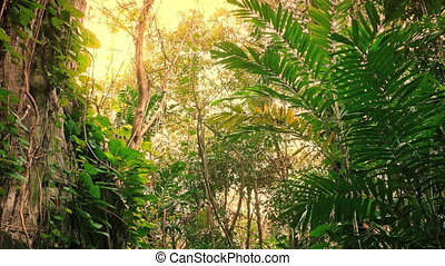 Travel Through Jungle Rocks In Sun Glow - Traveling past...