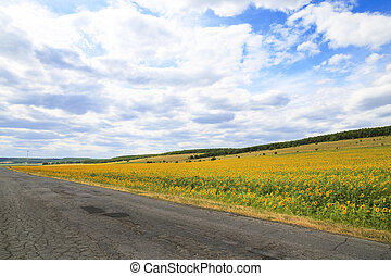 Travel through the endless expanses of summer in warm weather. The road among the fields of harvest of sunflower and forests against the blue sky with clouds. Growing helianthus in the Saratov region