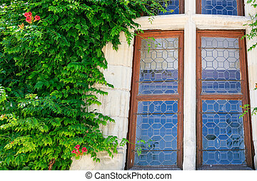 old window and green bindweed plant