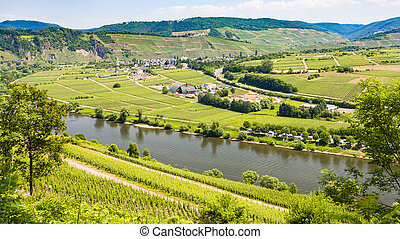 vineyards and gardens in valley of Mosel river
