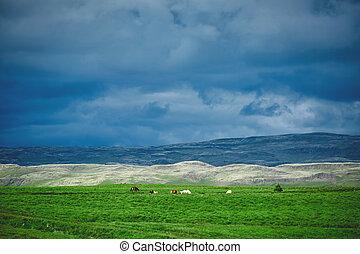 herd of horses in a field