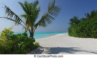 access to sea on maldives beach with palms trees - travel,...