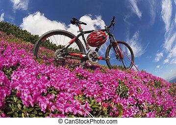 travel with flower carpathians