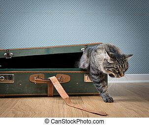 Traveler cat