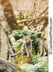 Traveler cat in bandana walking in forest.