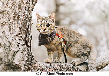 Traveler cat on a leash standing on branch of tree in the forest.