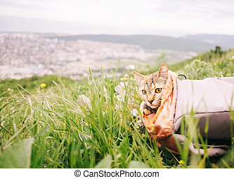 Traveler cat sitting in a backpack on summer meadow.
