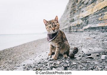 Traveler cat sitting on coast.