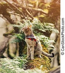Traveler cat walking in the forest.