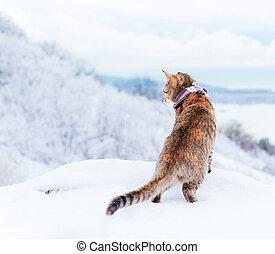 Traveler cat walking in winter.