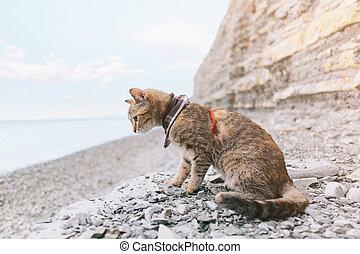 Traveler cat walking on coast by the sea.