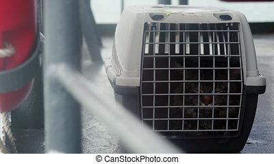Traveler Maine coon Cat in cage floating on a ship in the sea. 3840x2160, 4k