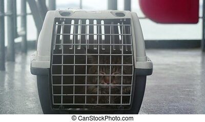 Traveler Maine coon Cat in cage floating on a ship in the sea. 3840x2160