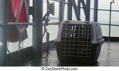 Traveler Maine coon Cat in cage floating on a ship in the sea. 4k