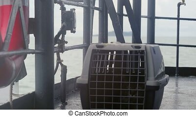Traveler Maine coon Cat in cage floating on a ship in the sea.